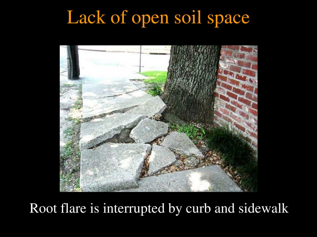 Lack of open soil space