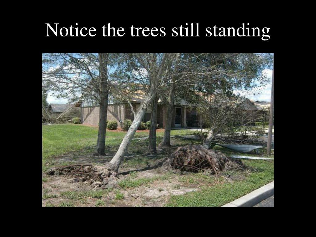 Notice the trees still standing