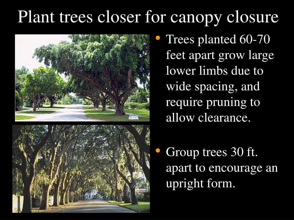 Plant trees closer for canopy closure
