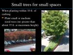 small trees for small spaces