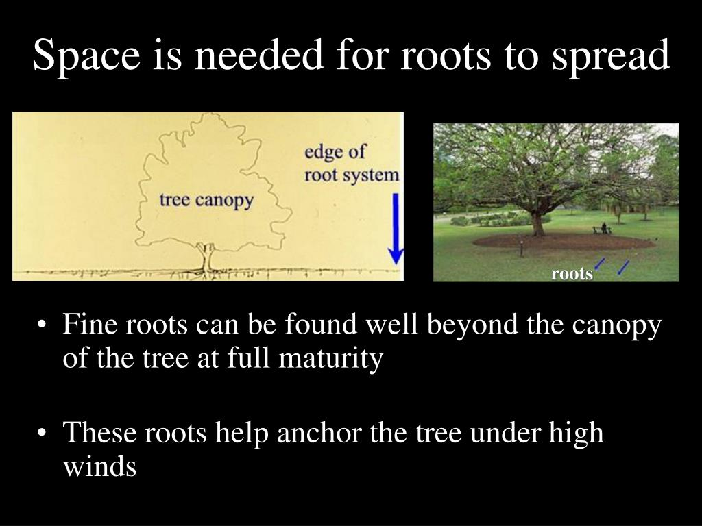 Space is needed for roots to spread