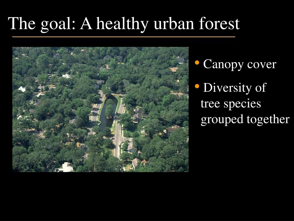 The goal: A healthy urban forest