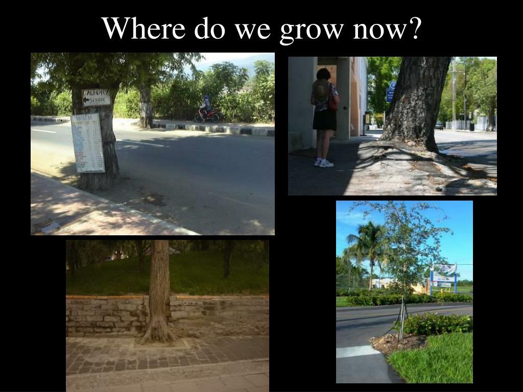 Where do we grow now?