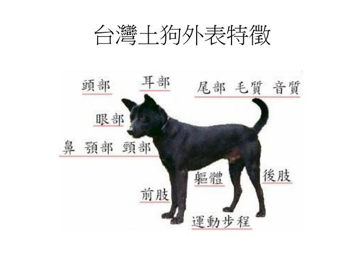 台灣土狗外表特徵
