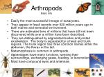 arthropods basic info