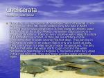chelicerata horseshoe crabs habitat