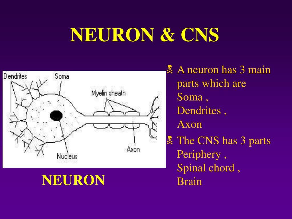 NEURON & CNS