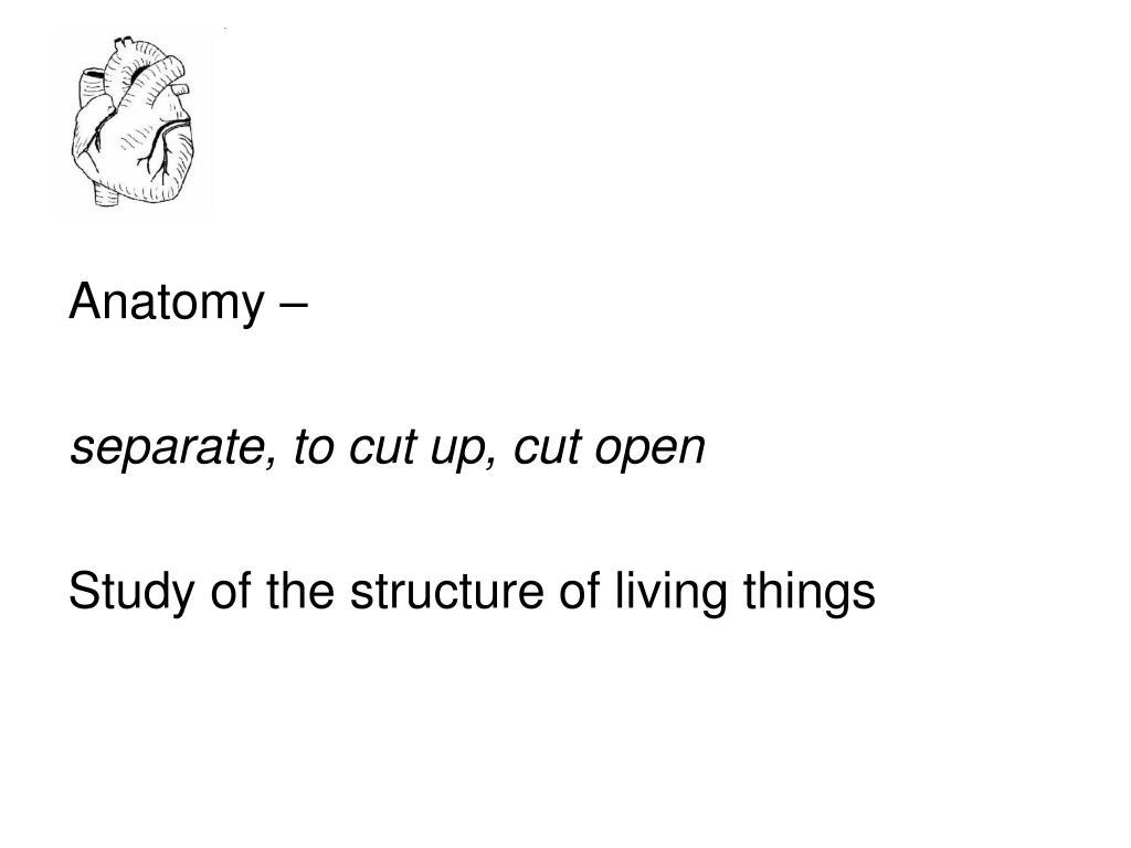 Anatomy –