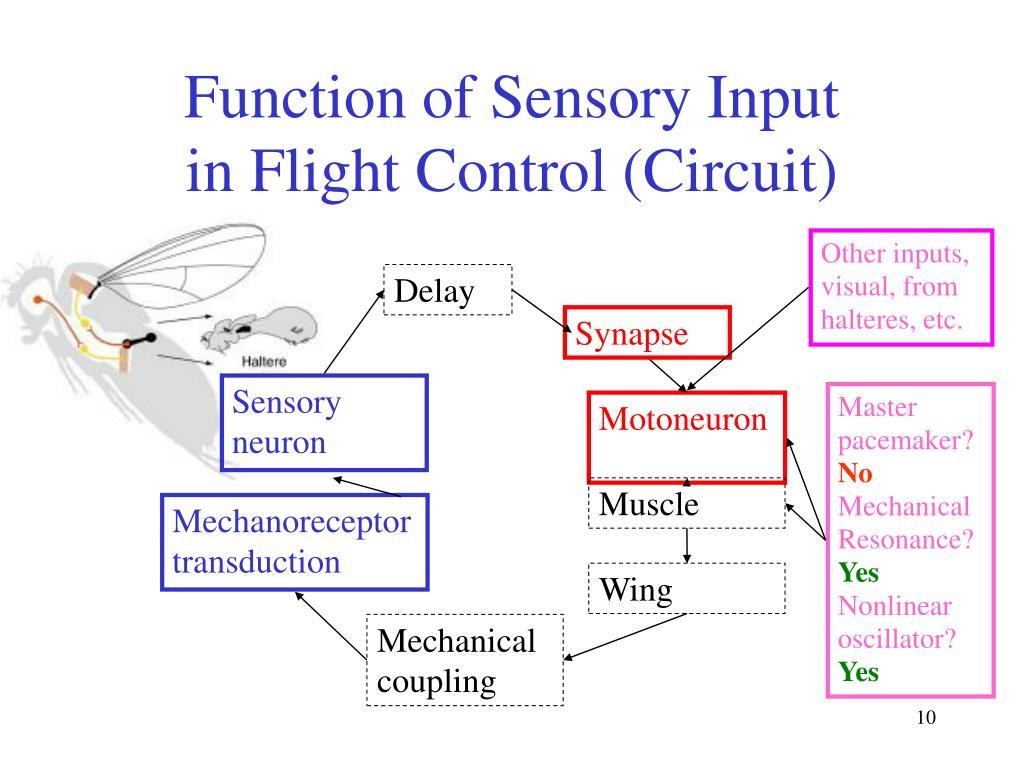 Function of Sensory Input