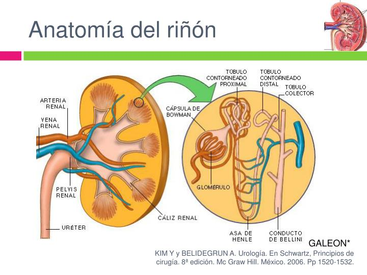 PPT - Cáncer Renal PowerPoint Presentation - ID:921584