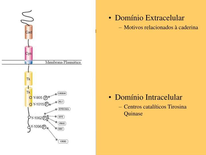Domínio Extracelular