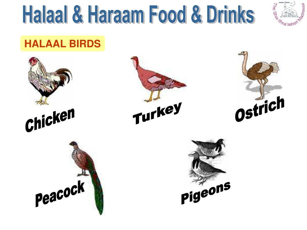 Halaal & Haraam Food & Drinks