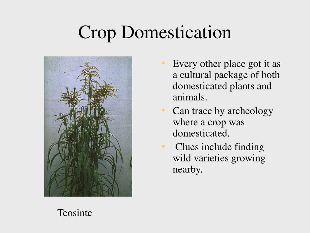 Crop Domestication