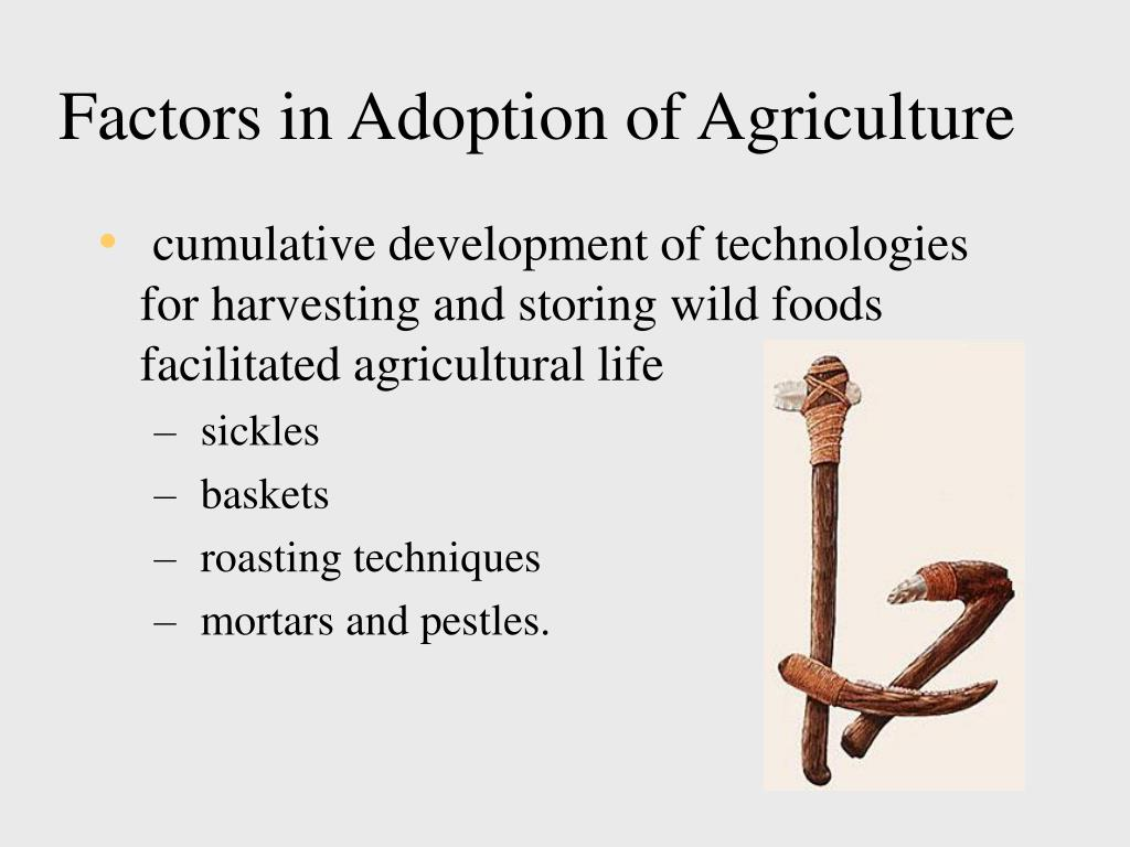 Factors in Adoption of Agriculture