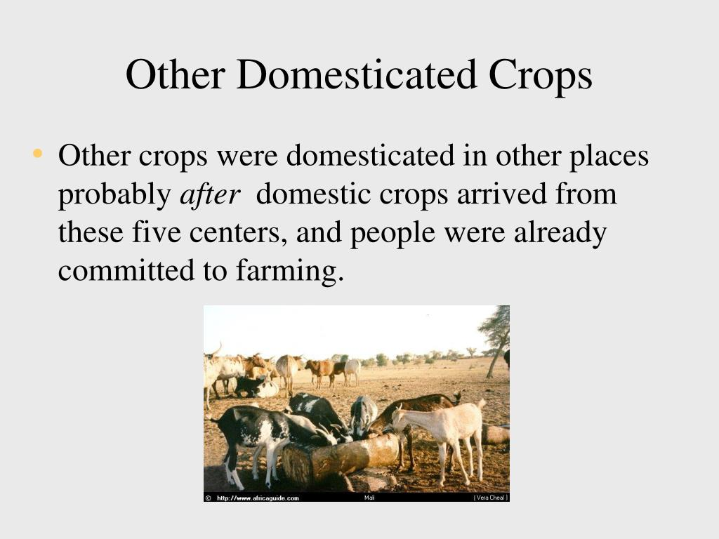 Other Domesticated Crops