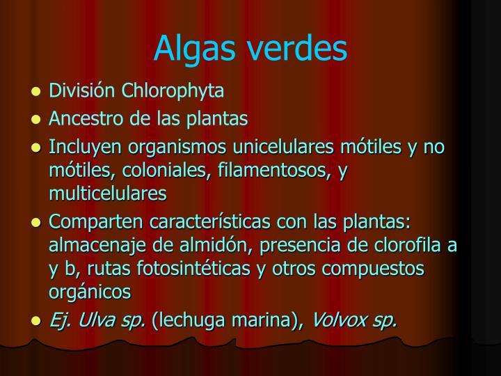 Division phaeophyta reproduccion asexual de las plantas