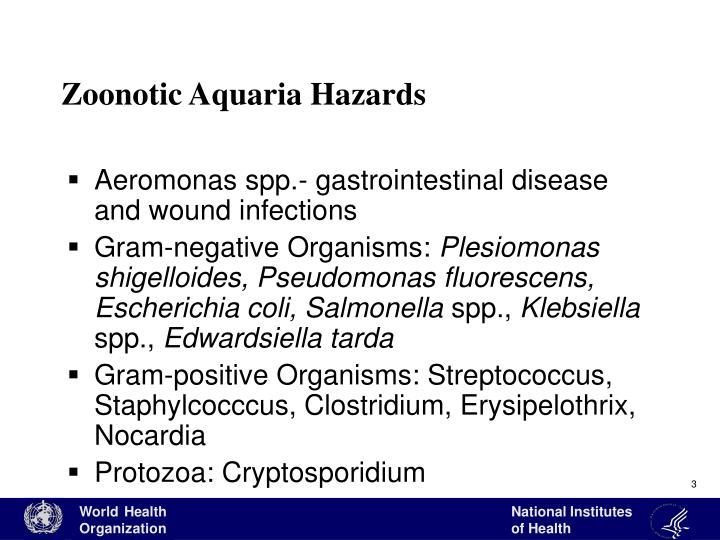 Zoonotic aquaria hazards