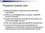 posterior retral valv