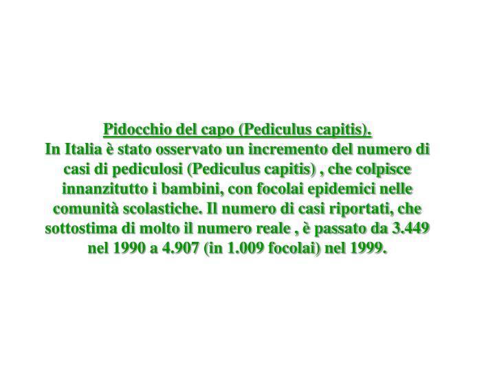 Pidocchio del capo (Pediculus capitis).