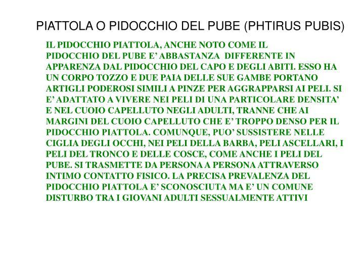 PIATTOLA O PIDOCCHIO DEL PUBE (PHTIRUS PUBIS)