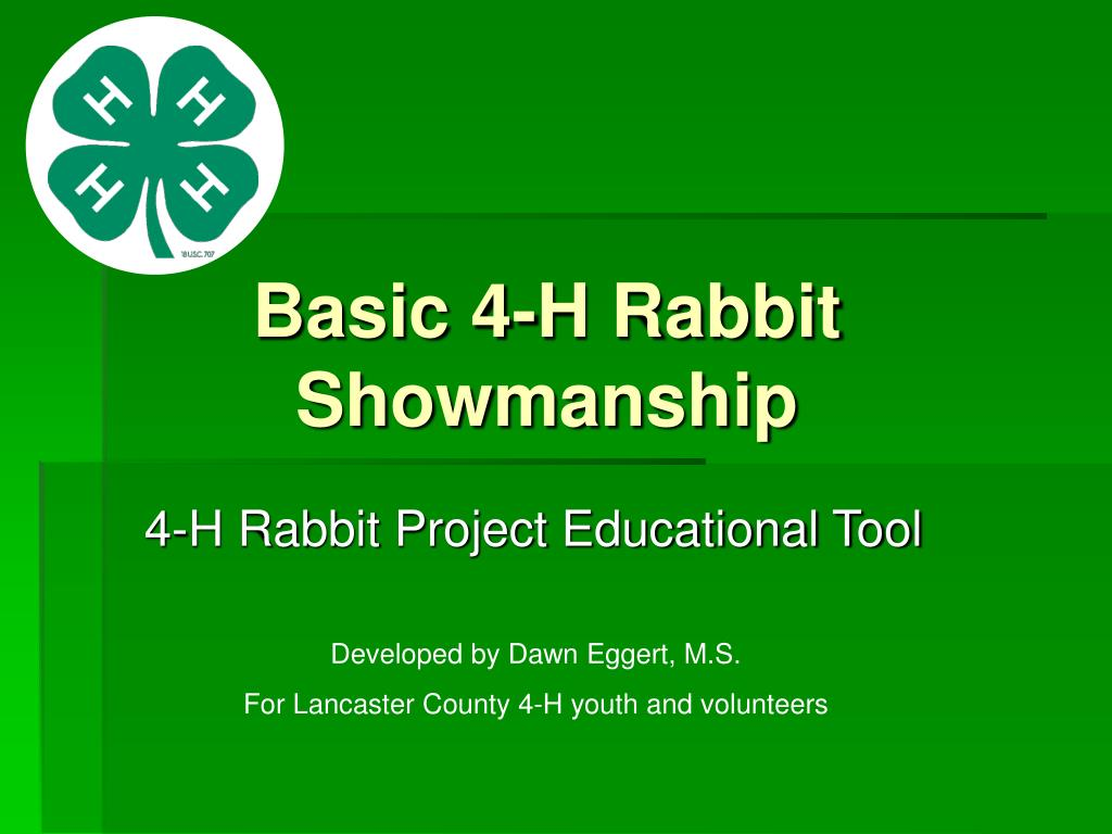 basic 4 h rabbit showmanship l.