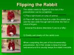flipping the rabbit