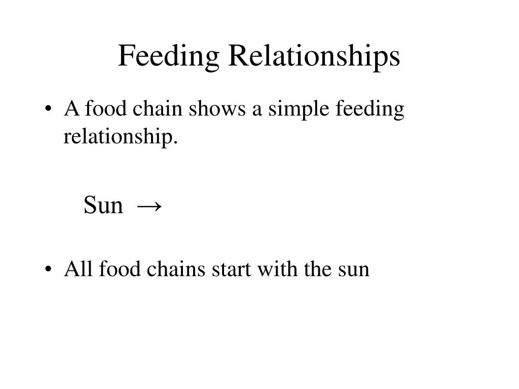 feeding relationships l.