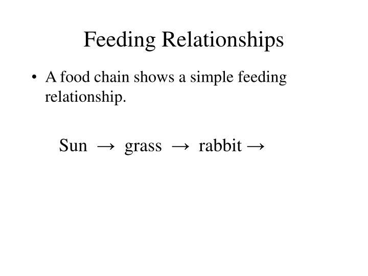 Feeding relationships3