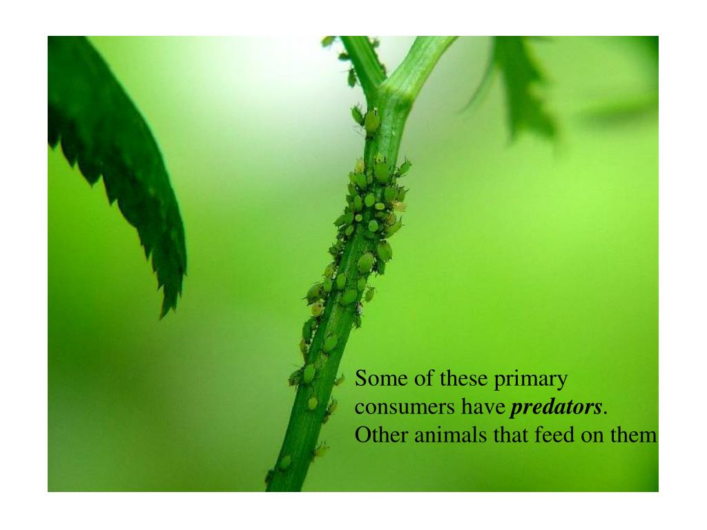 Some of these primary consumers have