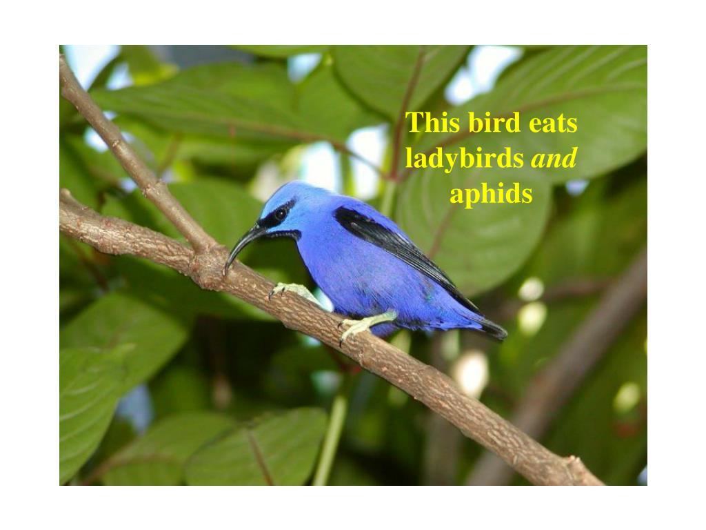 This bird eats ladybirds