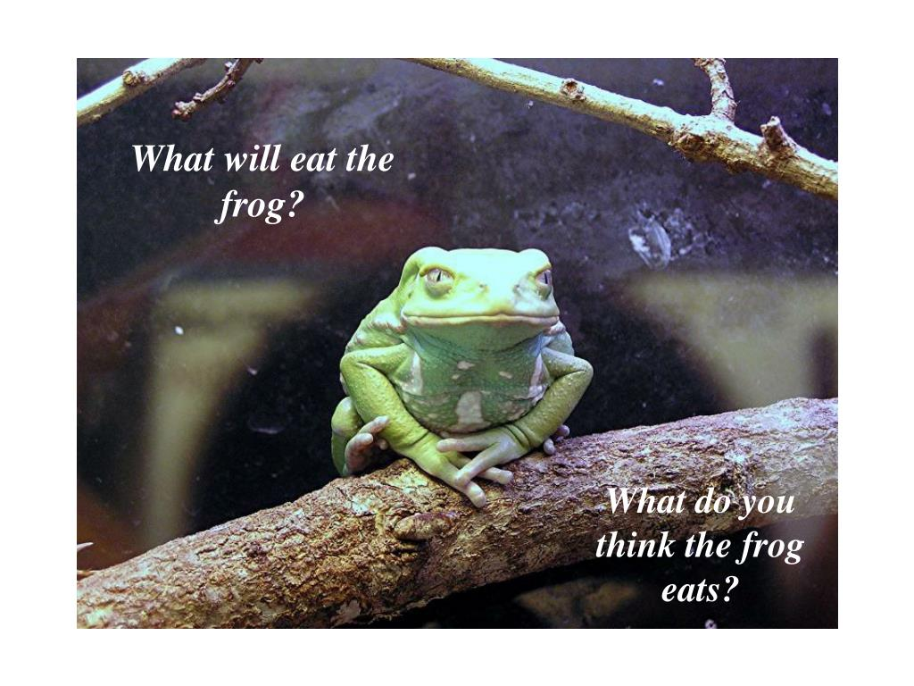 What will eat the frog?
