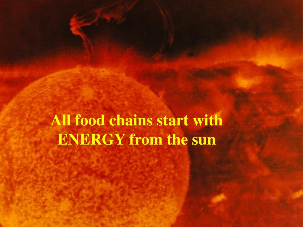All food chains start with ENERGY from the sun