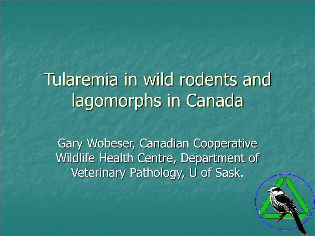 tularemia in wild rodents and lagomorphs in canada l.