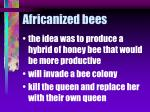 africanized bees79
