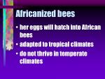 africanized bees80