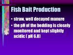 fish bait production33