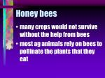 honey bees53