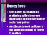 honey bees54