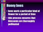 honey bees55