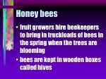 honey bees56