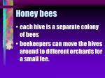 honey bees57
