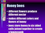 honey bees59