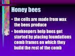 honey bees60