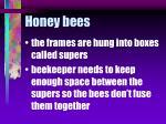 honey bees61