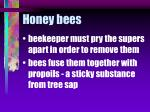 honey bees63