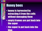 honey bees64