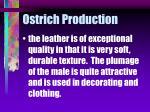 ostrich production42