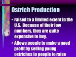 ostrich production44