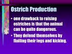ostrich production47