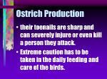 ostrich production48